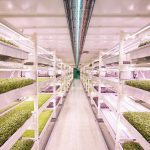 This Subterranean Farm Is Hidden 33 Metres Underneath Clapham, London
