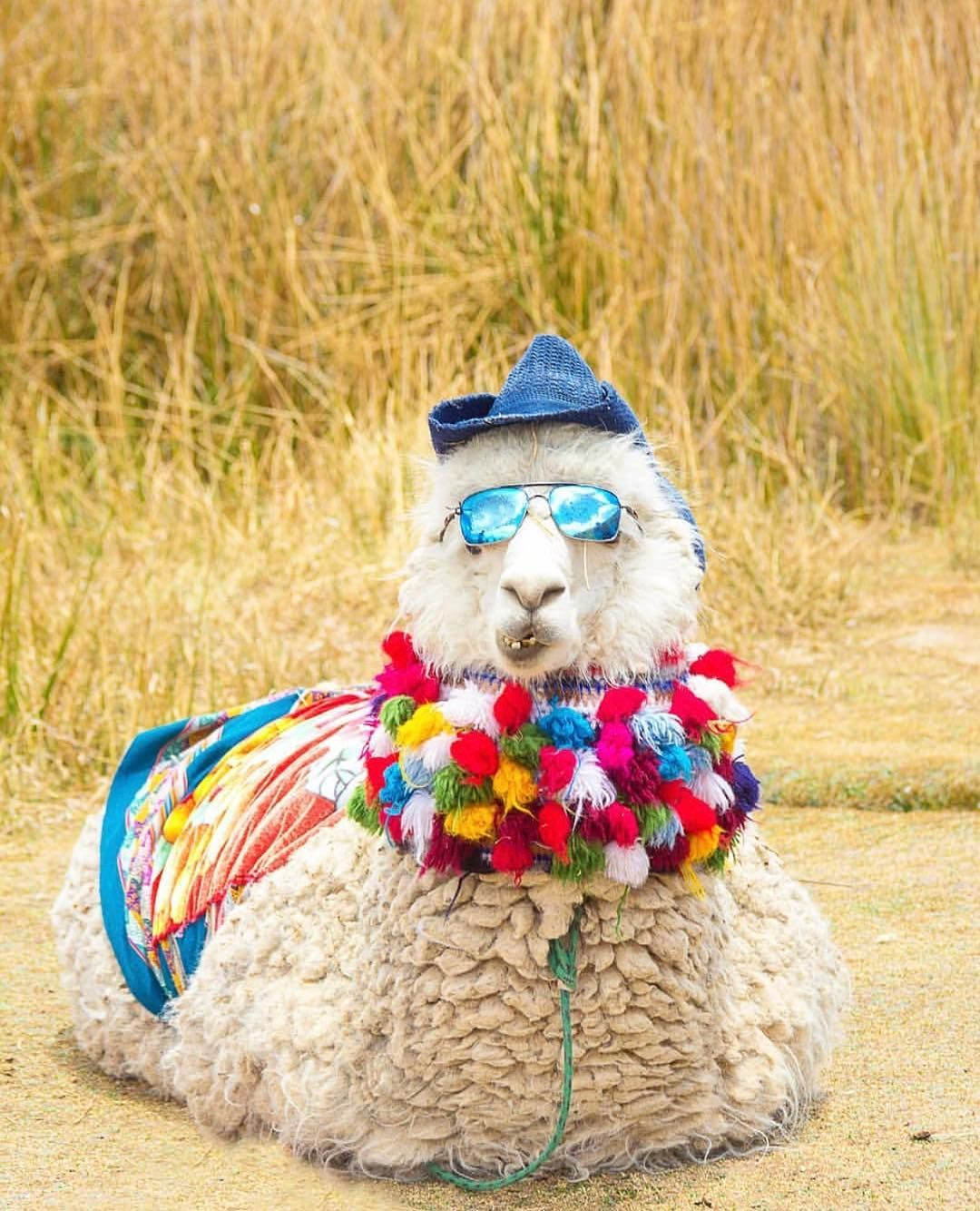 4 Rental Ideas for Fat Llama Fashionistas