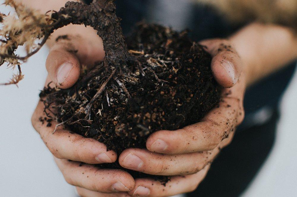 An Introduction To Urban Gardening