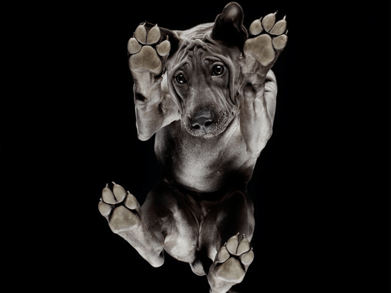 Photographing Animals From Below