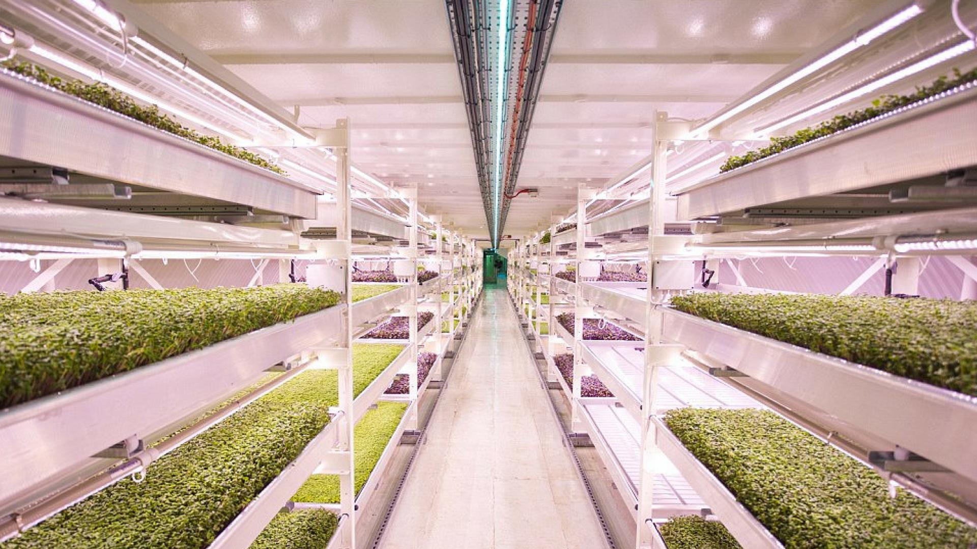 This Subterranean Farm Is Hidden 33 Metres Underneath Clapham, London